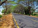 Greenery @ ECR Road