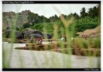 People Taking a Dip at Tungabhadra River